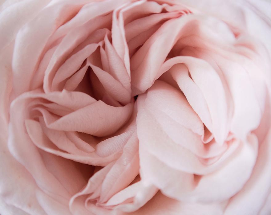 il-pour-moi-stoff-rosa